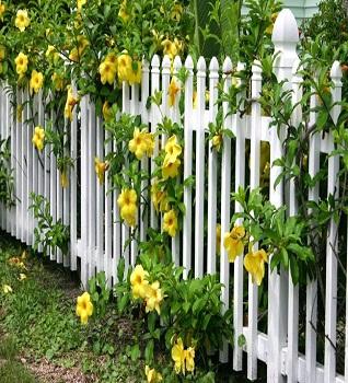 Học ngay cách trang trí sân vườn với các loài hoa nở rộ mùa hè